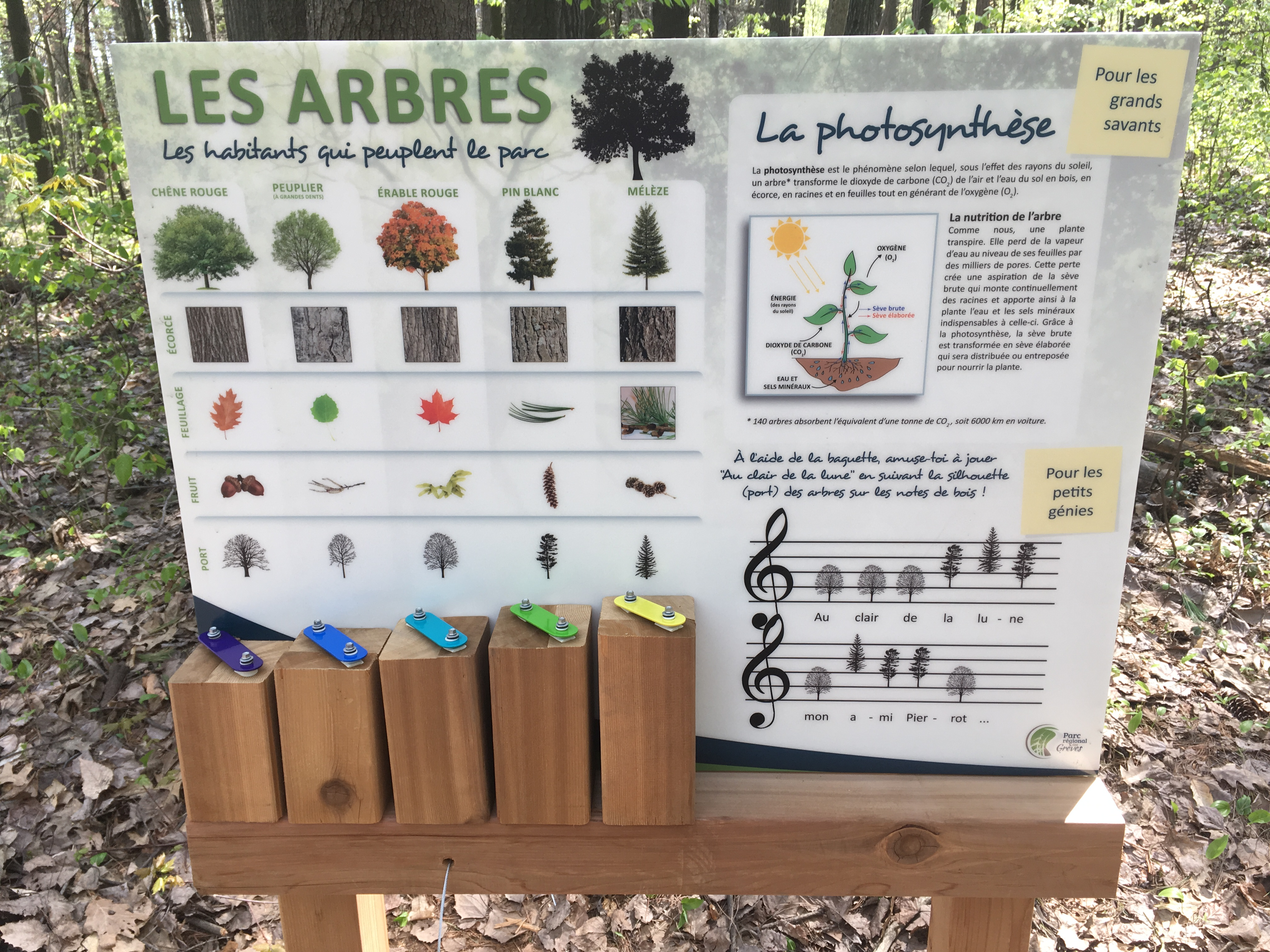 Xylophone forestier